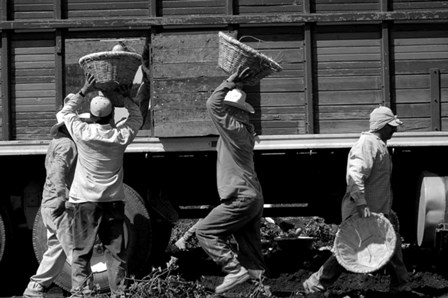 Workers load jicama into a truck in Tlaquiltenango